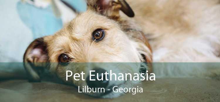 Pet Euthanasia Lilburn - Georgia