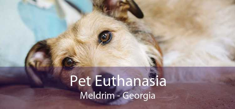 Pet Euthanasia Meldrim - Georgia