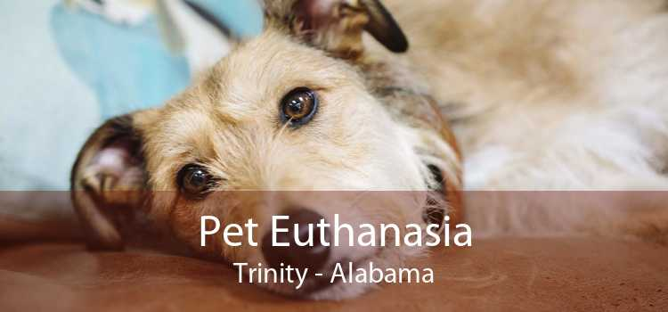 Pet Euthanasia Trinity - Alabama
