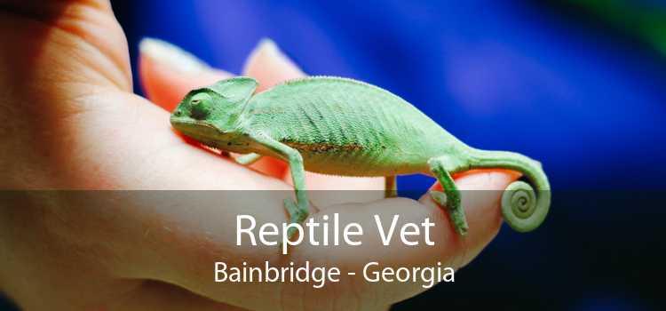 Reptile Vet Bainbridge - Georgia