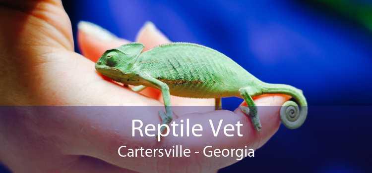 Reptile Vet Cartersville - Georgia