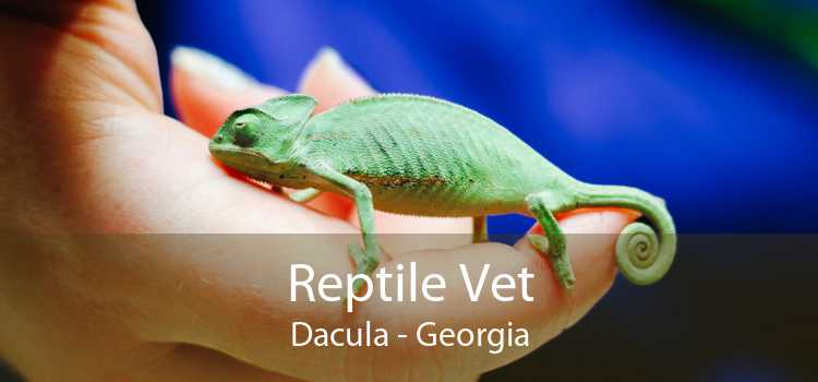 Reptile Vet Dacula - Georgia