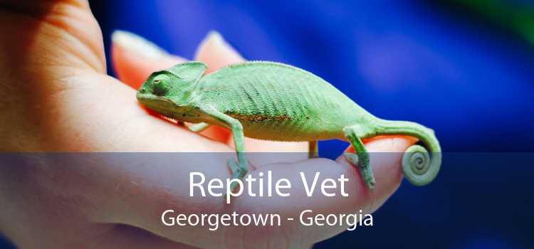 Reptile Vet Georgetown - Georgia