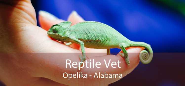 Reptile Vet Opelika - Alabama