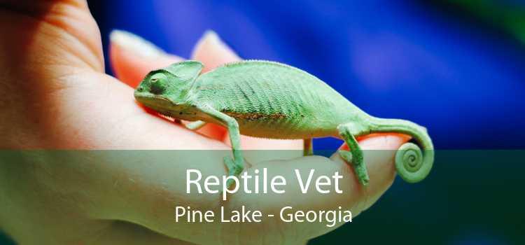 Reptile Vet Pine Lake - Georgia