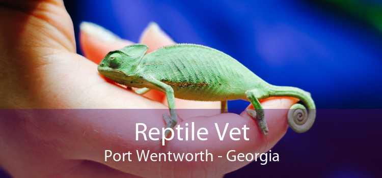 Reptile Vet Port Wentworth - Georgia
