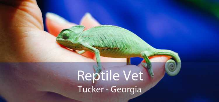Reptile Vet Tucker - Georgia