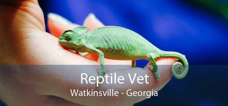 Reptile Vet Watkinsville - Georgia