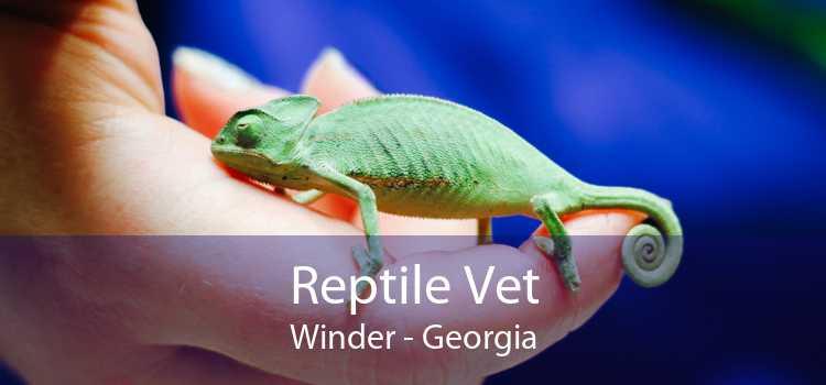 Reptile Vet Winder - Georgia