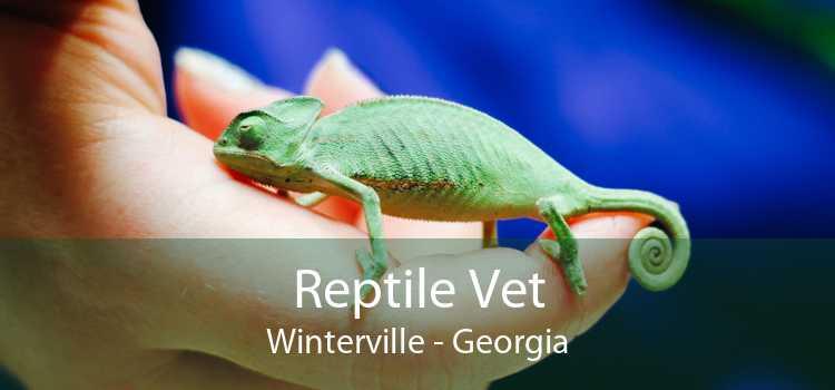 Reptile Vet Winterville - Georgia