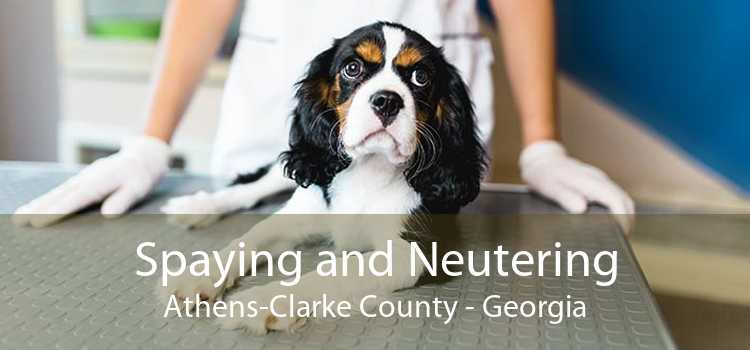 Spaying and Neutering Athens-Clarke County - Georgia