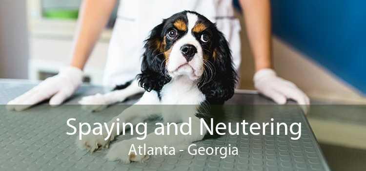 Spaying and Neutering Atlanta - Georgia