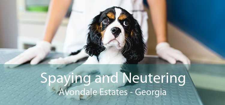 Spaying and Neutering Avondale Estates - Georgia
