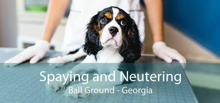 Spaying and Neutering Ball Ground - Georgia