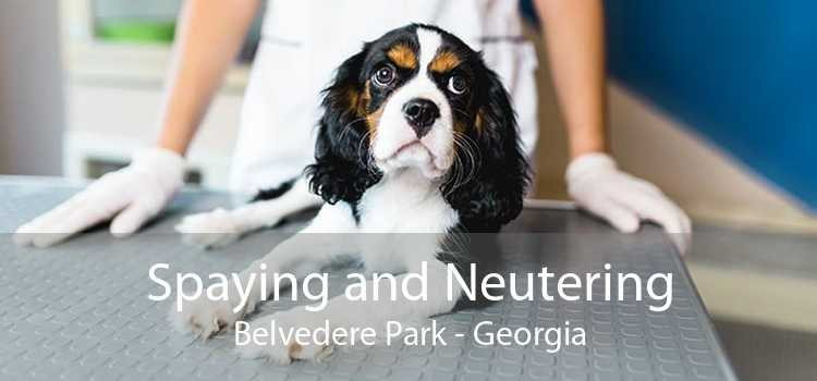 Spaying and Neutering Belvedere Park - Georgia