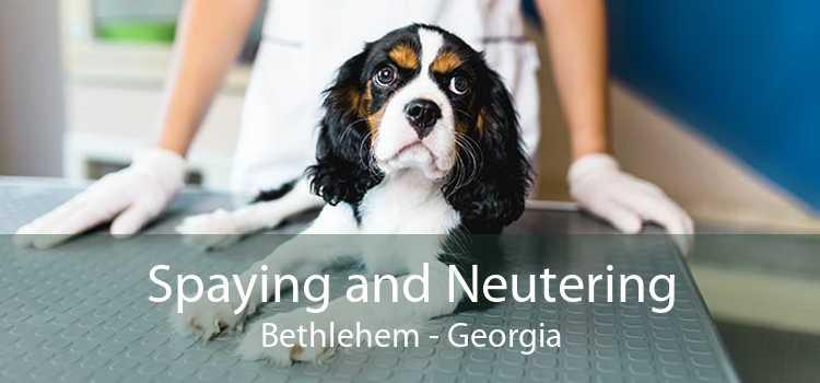 Spaying and Neutering Bethlehem - Georgia