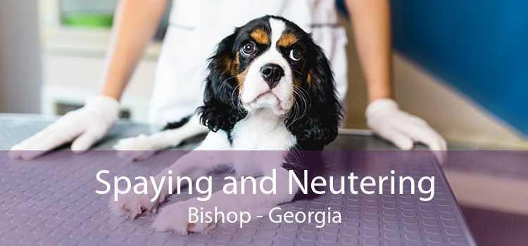 Spaying and Neutering Bishop - Georgia