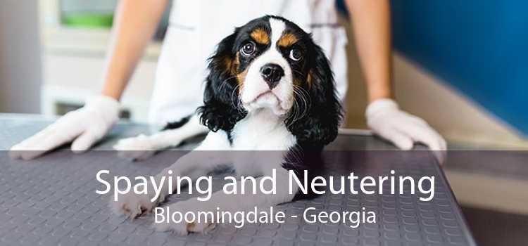 Spaying and Neutering Bloomingdale - Georgia