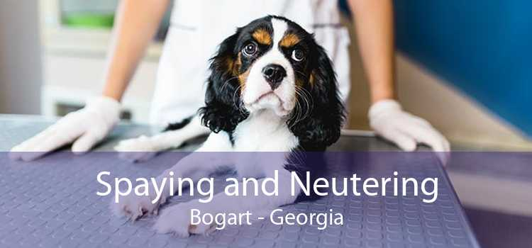 Spaying and Neutering Bogart - Georgia