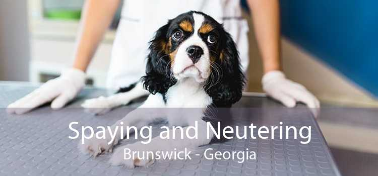 Spaying and Neutering Brunswick - Georgia