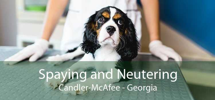 Spaying and Neutering Candler-McAfee - Georgia