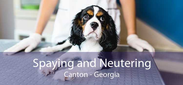 Spaying and Neutering Canton - Georgia