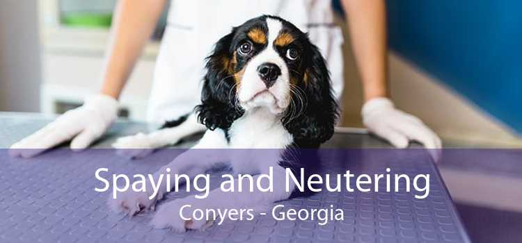 Spaying and Neutering Conyers - Georgia