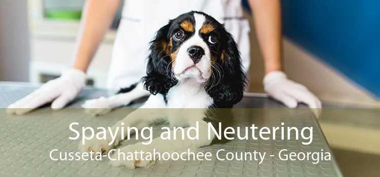 Spaying and Neutering Cusseta-Chattahoochee County - Georgia