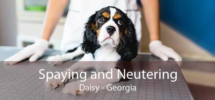 Spaying and Neutering Daisy - Georgia