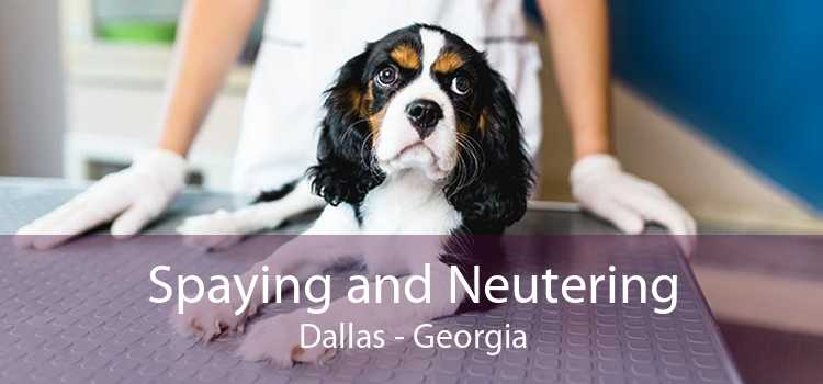 Spaying and Neutering Dallas - Georgia