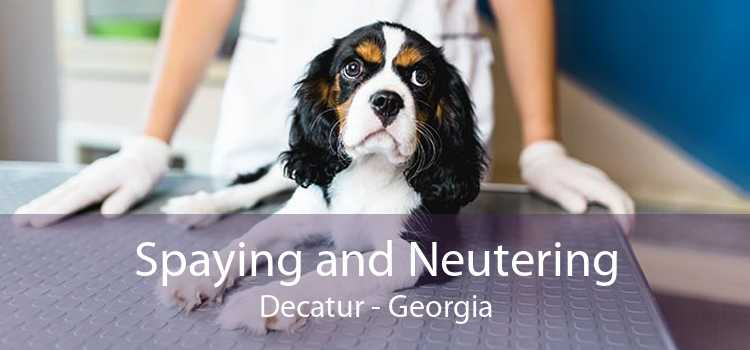 Spaying and Neutering Decatur - Georgia