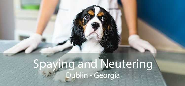 Spaying and Neutering Dublin - Georgia