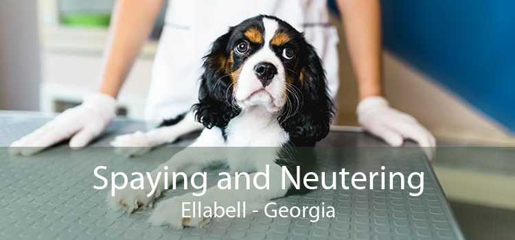 Spaying and Neutering Ellabell - Georgia