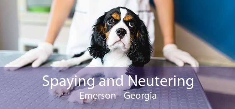 Spaying and Neutering Emerson - Georgia