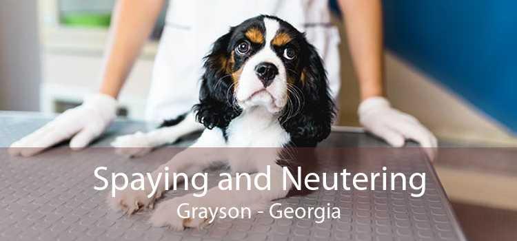 Spaying and Neutering Grayson - Georgia