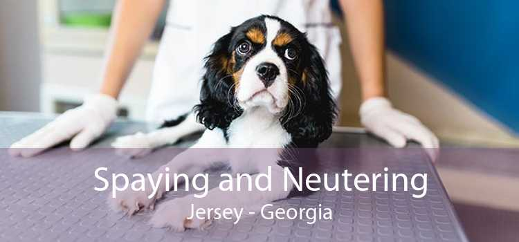 Spaying and Neutering Jersey - Georgia