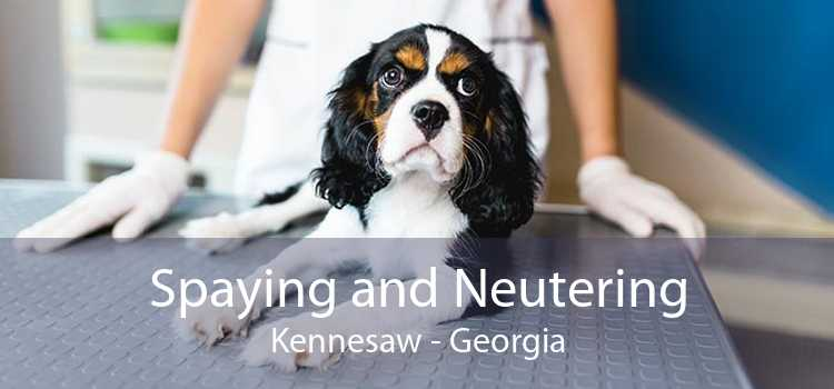 Spaying and Neutering Kennesaw - Georgia