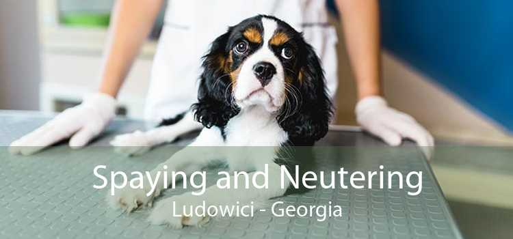Spaying and Neutering Ludowici - Georgia