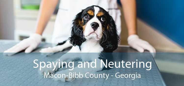 Spaying and Neutering Macon-Bibb County - Georgia