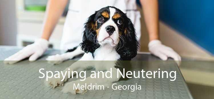 Spaying and Neutering Meldrim - Georgia