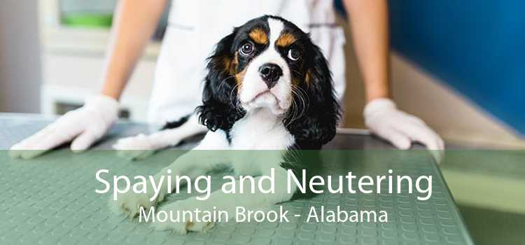 Spaying and Neutering Mountain Brook - Alabama