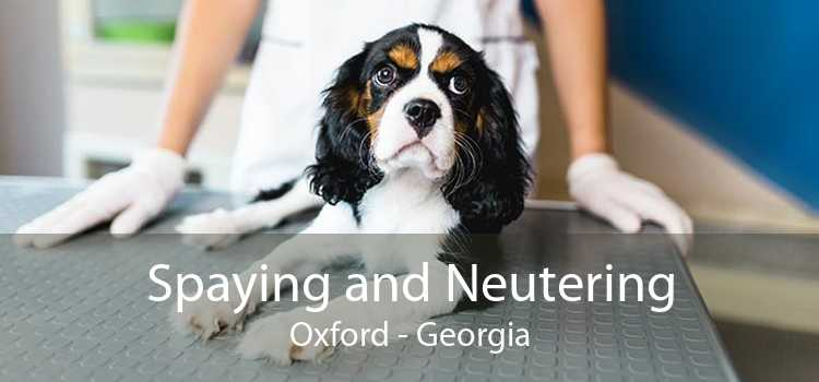 Spaying and Neutering Oxford - Georgia