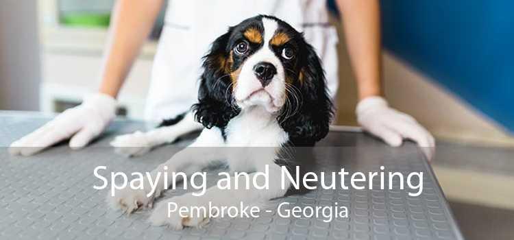 Spaying and Neutering Pembroke - Georgia