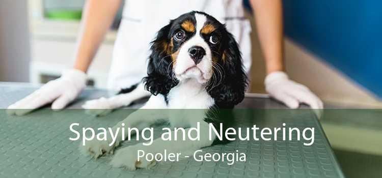 Spaying and Neutering Pooler - Georgia