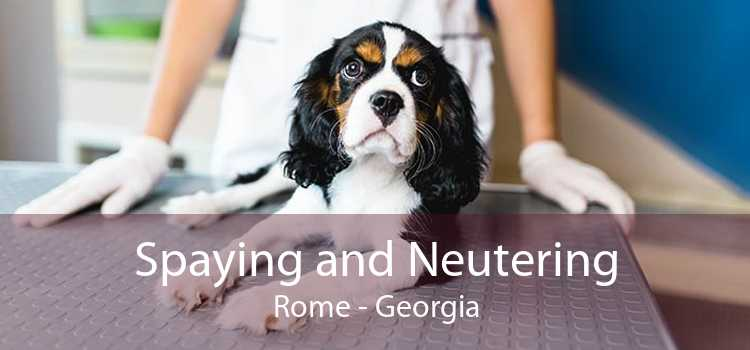 Spaying and Neutering Rome - Georgia