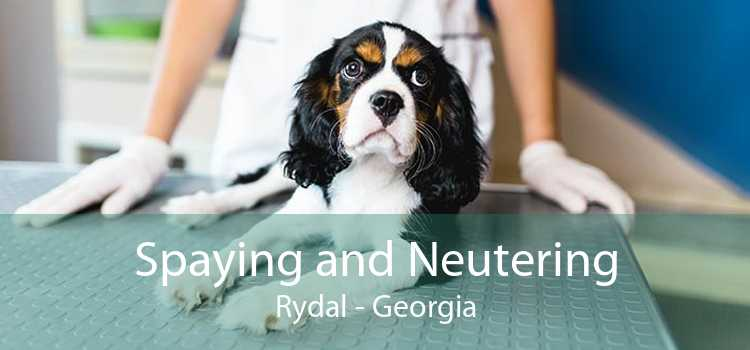 Spaying and Neutering Rydal - Georgia