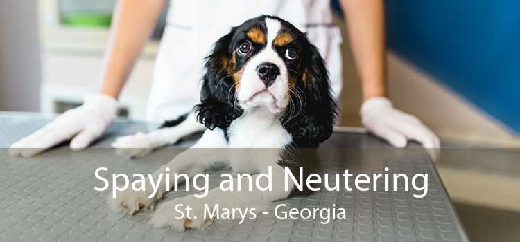 Spaying and Neutering St. Marys - Georgia