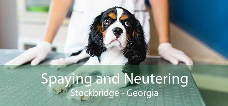 Spaying and Neutering Stockbridge - Georgia