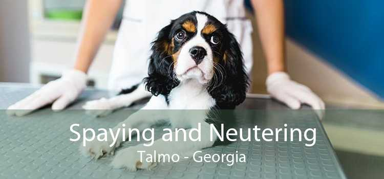 Spaying and Neutering Talmo - Georgia