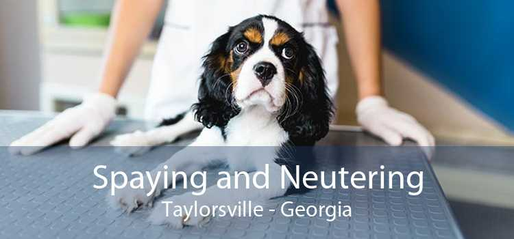 Spaying and Neutering Taylorsville - Georgia